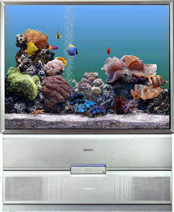 61. Оптико-проекционная схема.  100 Гц.  Система цветности TV.